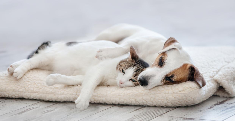 can pets sense pregnancy
