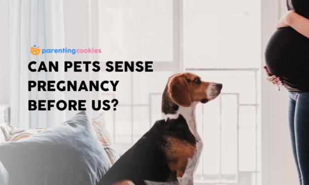 Can Pets Sense Pregnancy Before Us?